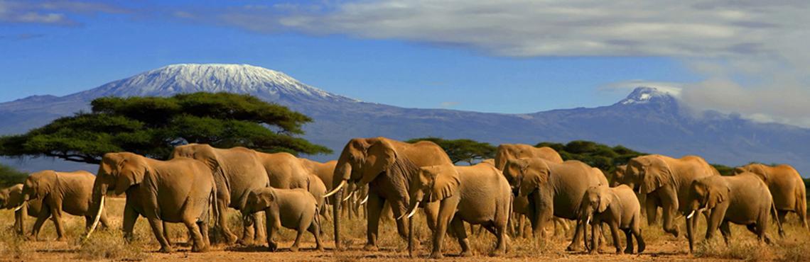 Image result for Safari national park kenia